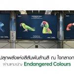 OPPOEndangered Colours (1)